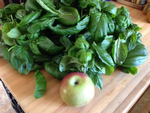 Day 51 basil harvest (apple for scale)
